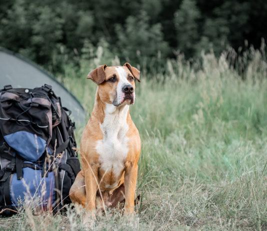 Pet survival